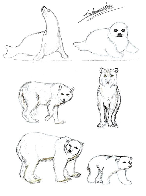 600x803 Tundra Animals Coloring Pages Tundra Animals Shamashin