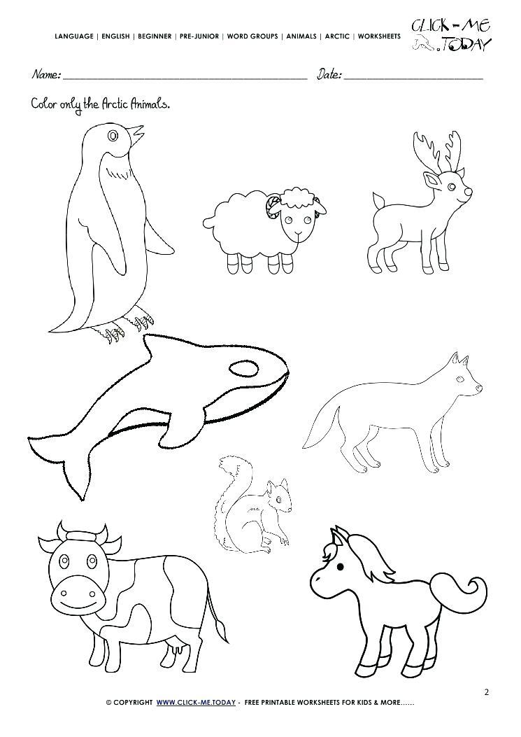 745x1053 Arctic Animals Coloring Pages Polar Arctic Animals Coloring Pages