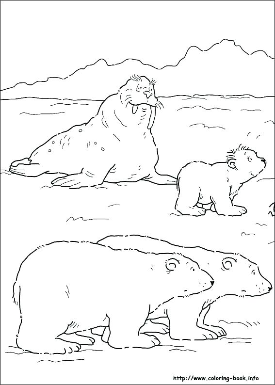 567x794 Arctic Animals Coloring Sheets Find The Arctic Animals Coloring