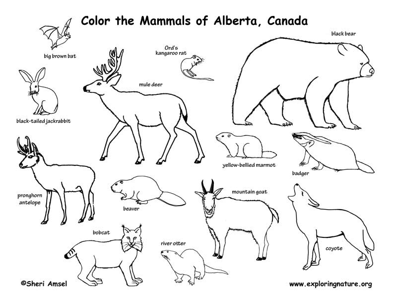 792x612 Coloring Pages Canadian Animals Tundra Animals Coloring Pages