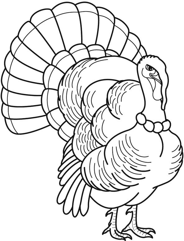 592x776 Best Turkey Images On Coloring Pages, Turkey