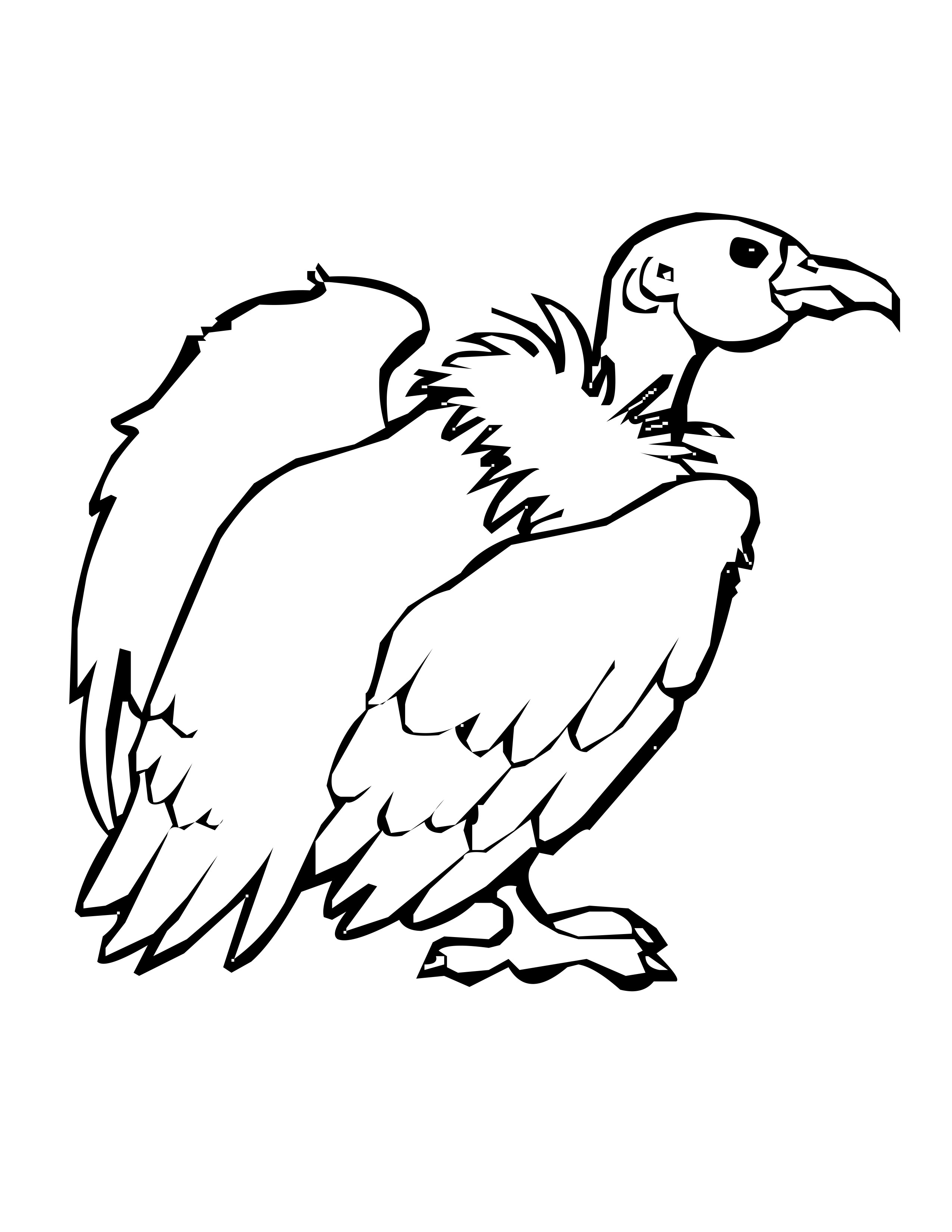 2550x3300 Turkey Vulture Coloring Page, Bird Coloring Pages