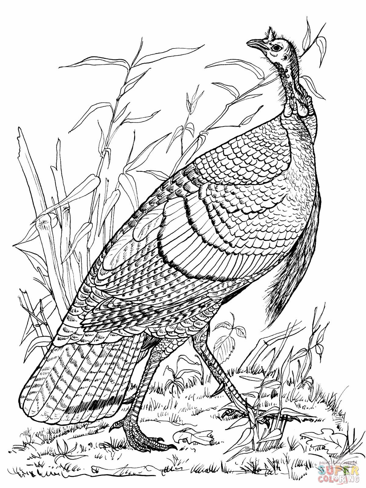 1200x1600 Wild Turkey Coloring Page