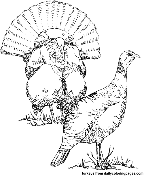 500x609 Coloring Pages Directory Coloring Pages Turkey