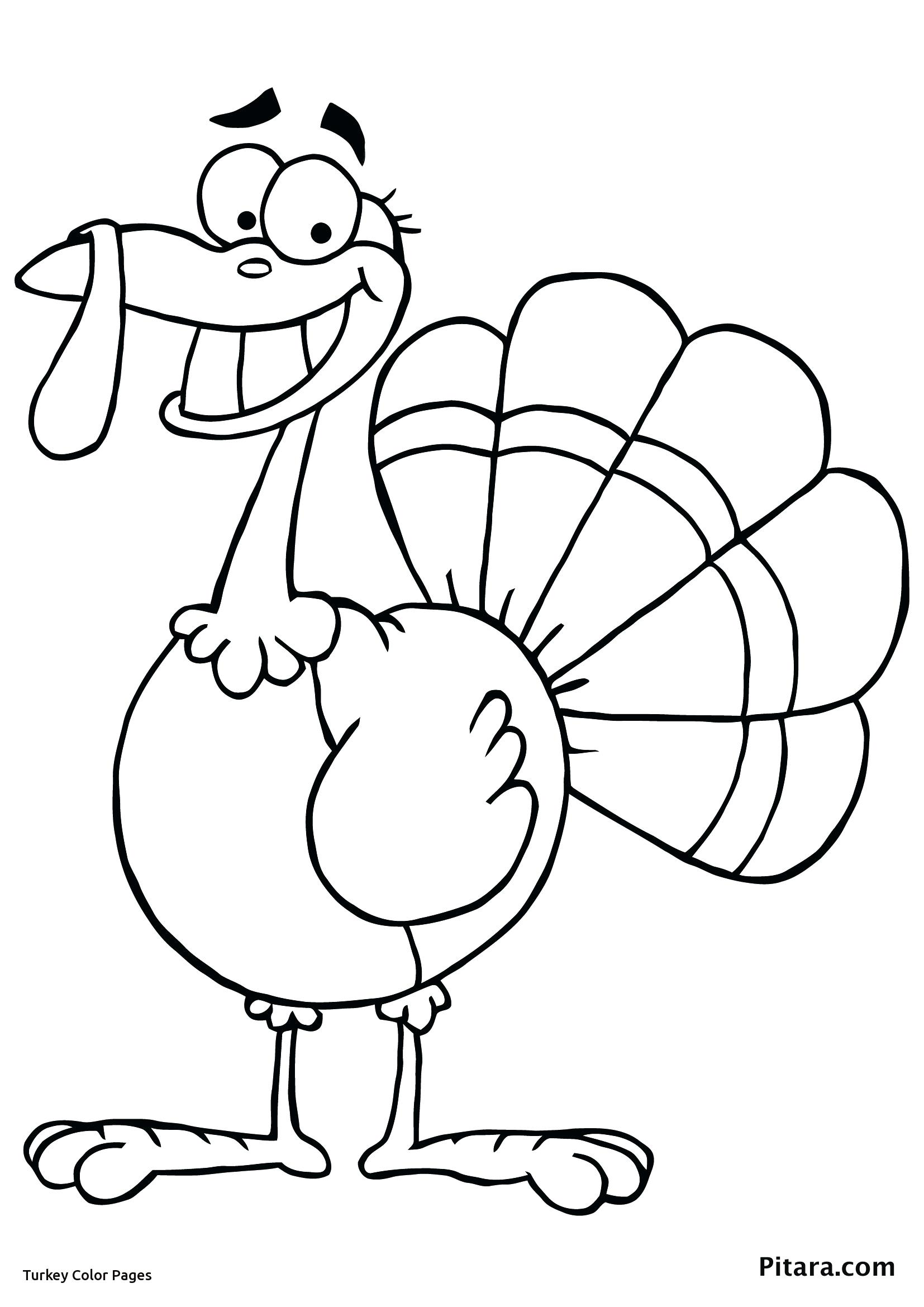 1654x2339 Love Turkey Bird Coloring Pages Security Picture To Color For Kids