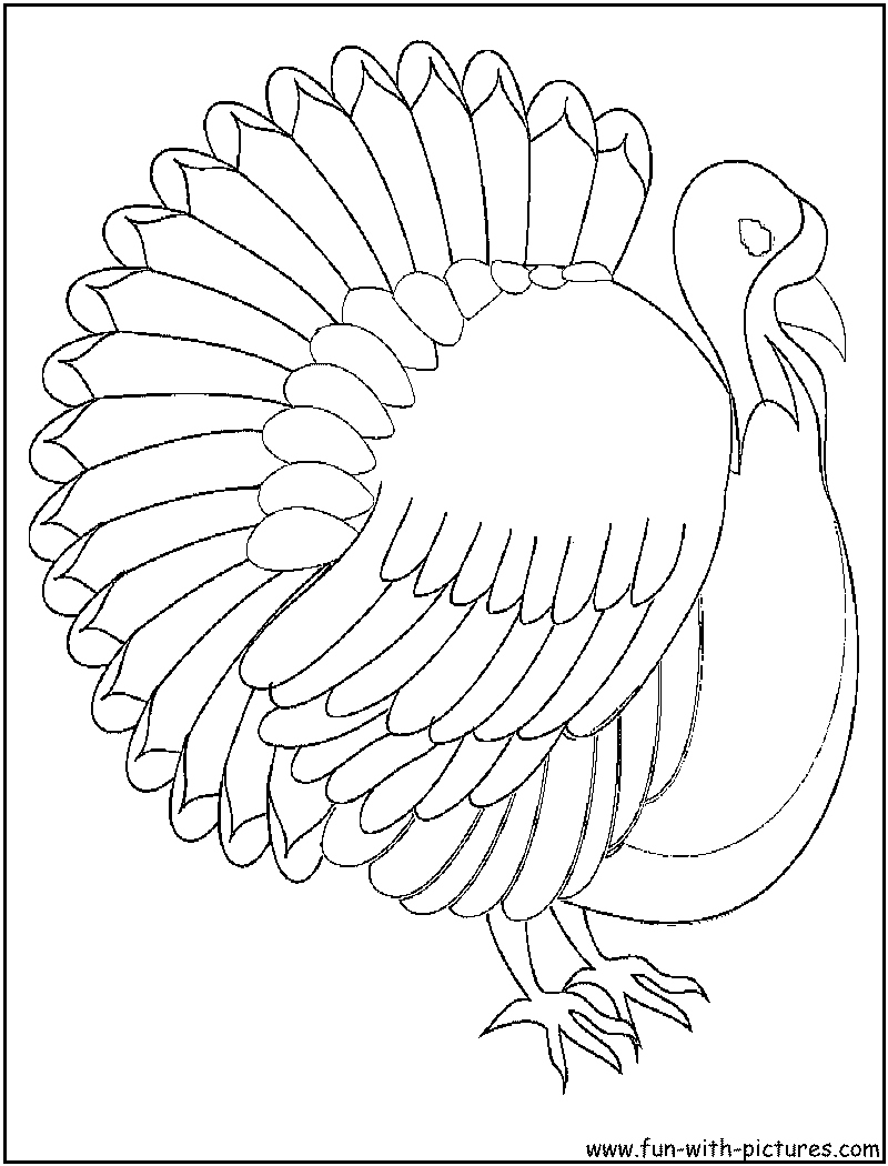 800x1050 Turkey Color Page Lovely Turkey Coloring Pages For Kids Logo