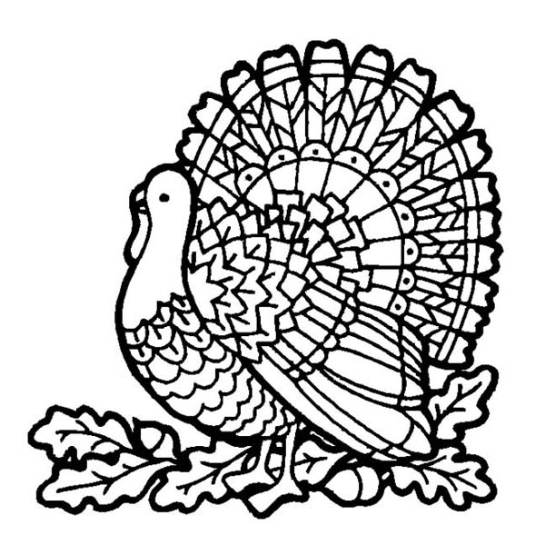 Turkey Coloring Pages For Kids At Getdrawings Com Free For