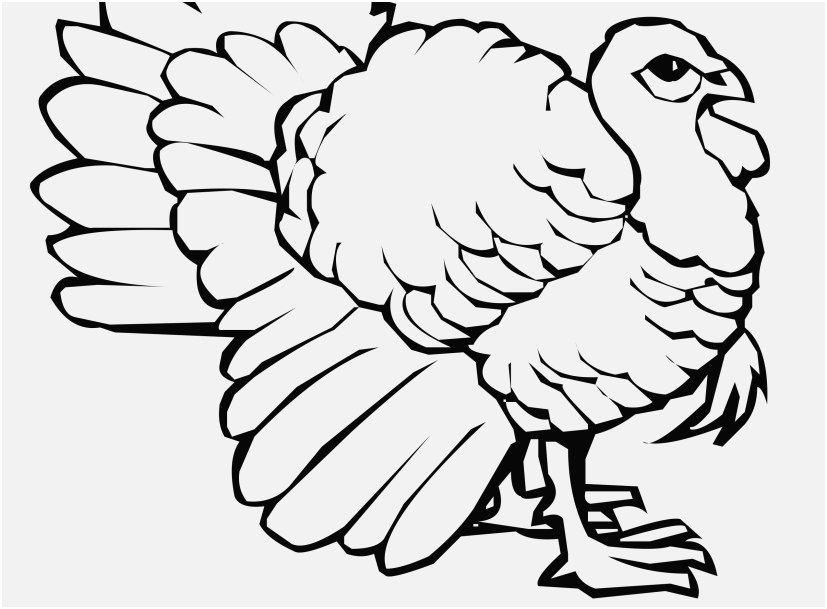 827x609 A Good Stock Turkey Coloring Pages Very Popular
