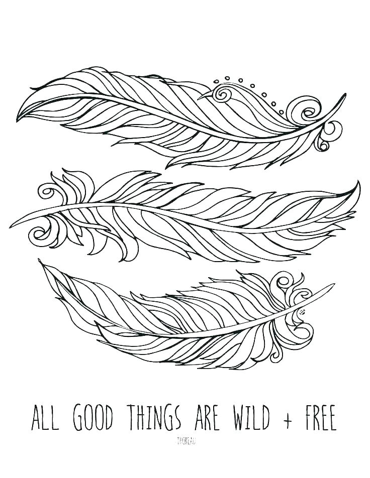 736x952 Peacock Feathers Coloring Pages