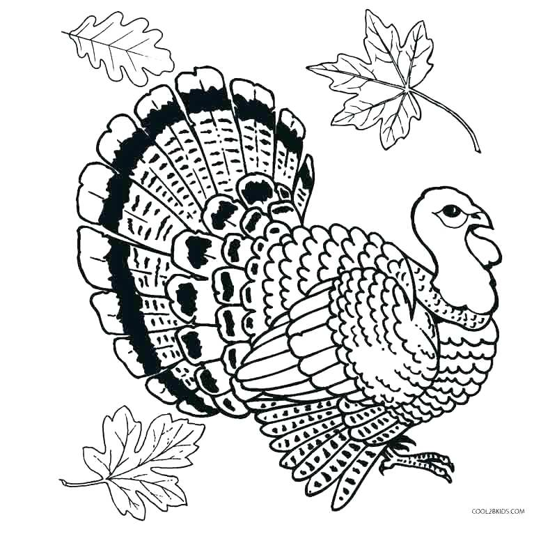 800x766 Free Printable Turkey Coloring Pages Preschool For Tiny Print Free