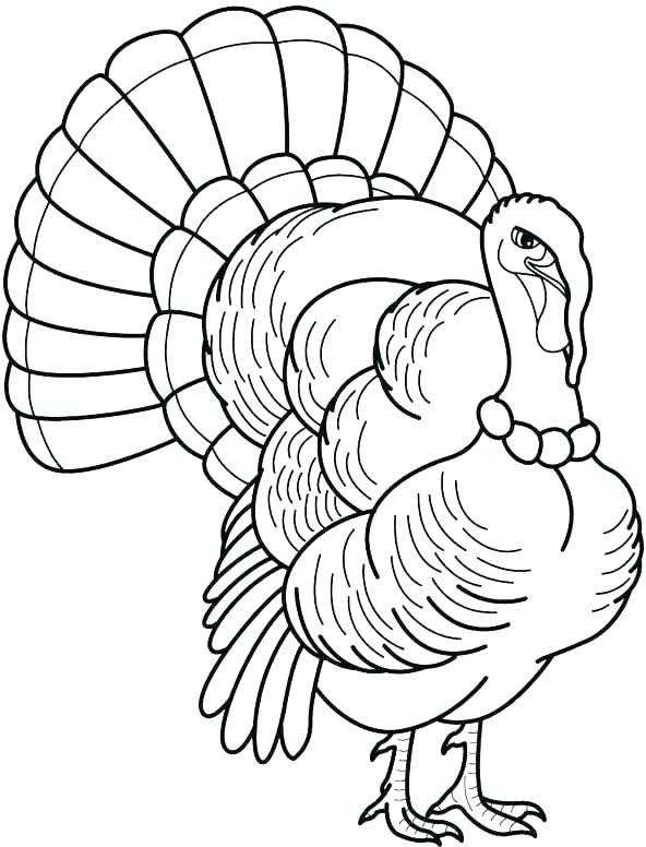 592x776 Coloring Page Of A Turkey