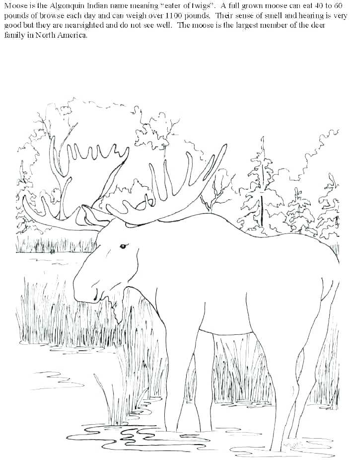 707x926 Hunting Coloring Pages Bear Hunt Coloring Pages Fish Hunting