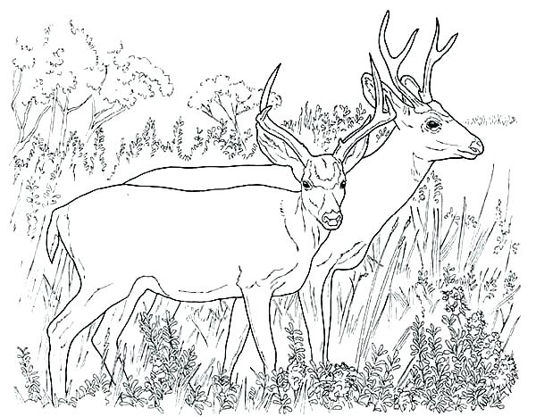 600x467 Hunting Coloring Pages Hunting Coloring Pages Hunting Coloring