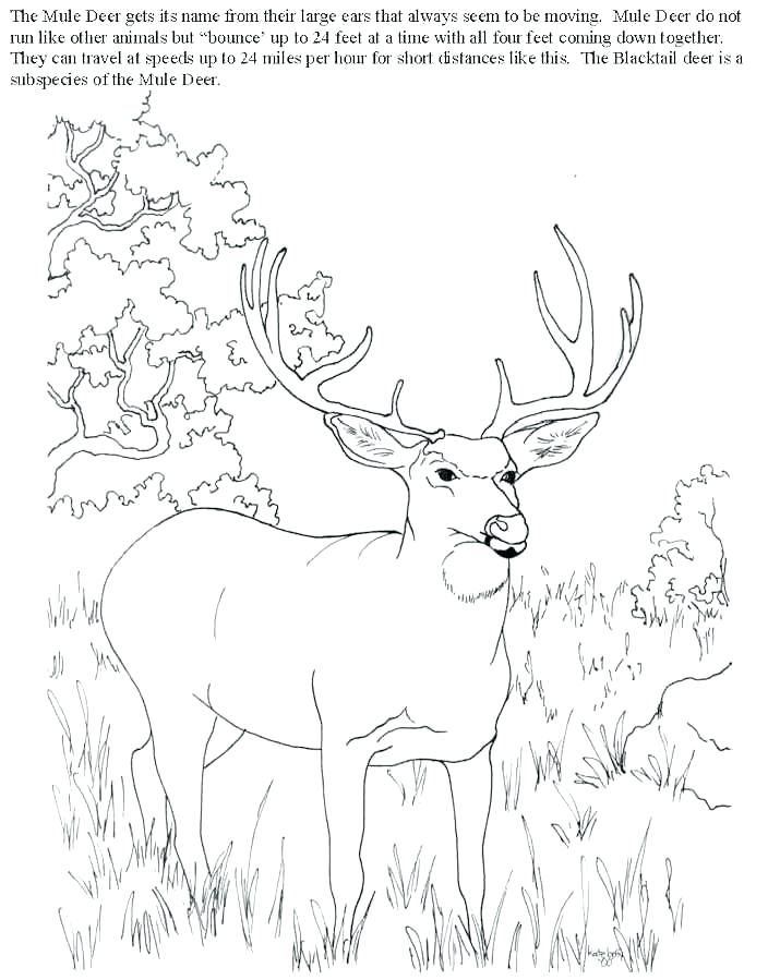 704x899 Hunting Coloring Pages Whitetail Deer Coloring Pages Deer Hunting