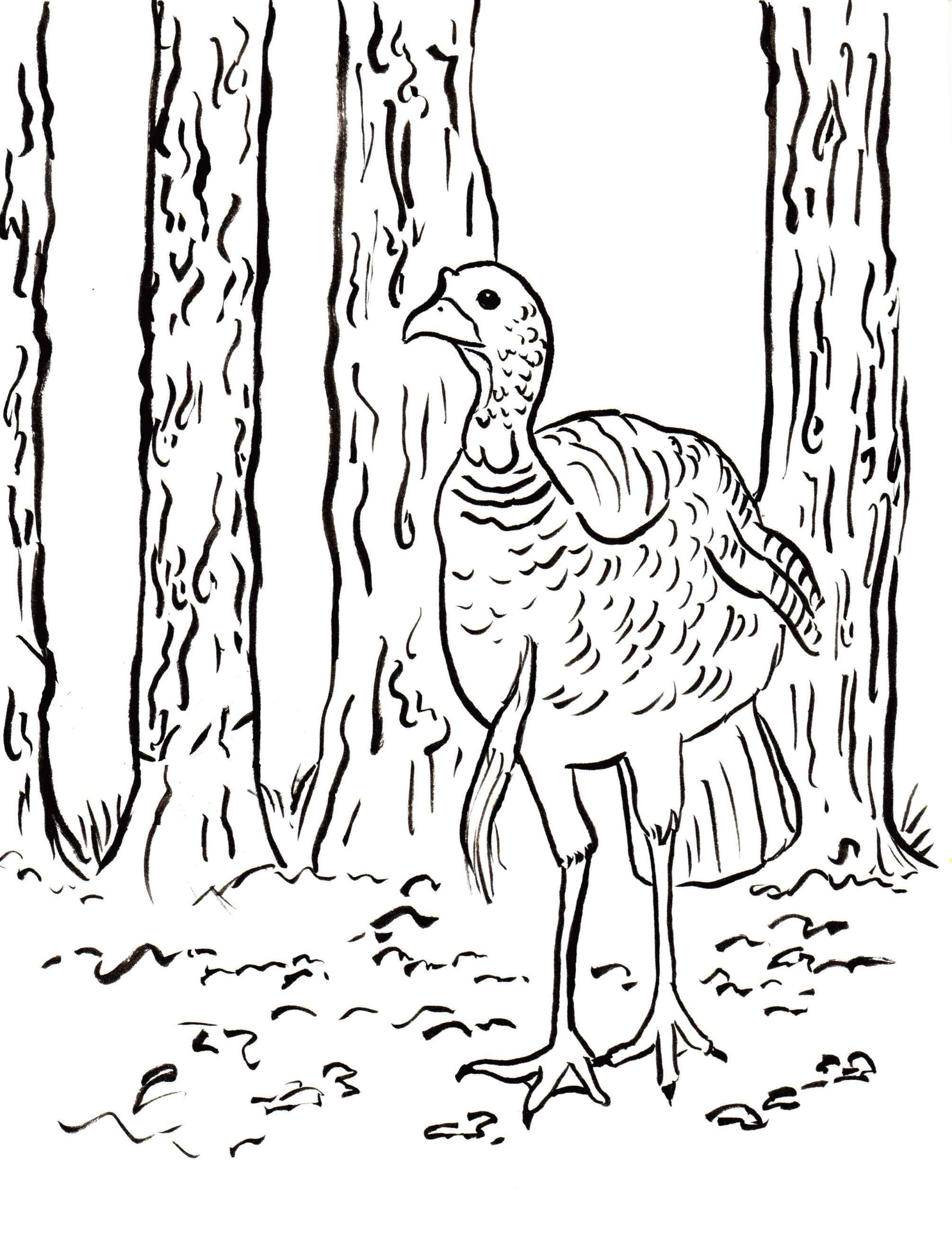 2011x2607 Turkey Hunting Coloring Pages Online Coloring Printable