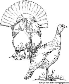 236x287 Wild Turkey Coloring Page