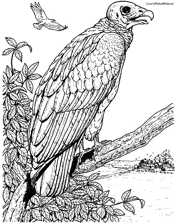 612x770 Tongues Of Fire Coloring Pages