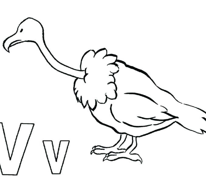 678x600 Turkey Vulture Coloring Pages Kids Coloring Best Vulture