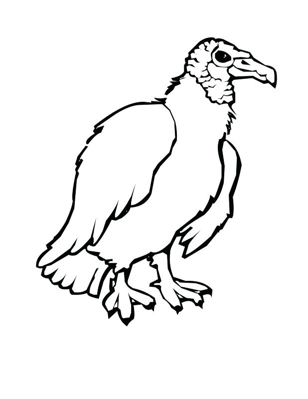 618x800 Turkey Vulture Coloring Pages Kids Coloring Adult Vulture Coloring