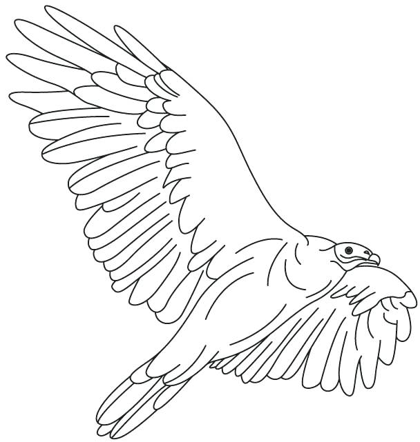 608x641 Turkey Vulture Coloring Pages Kids Coloring March