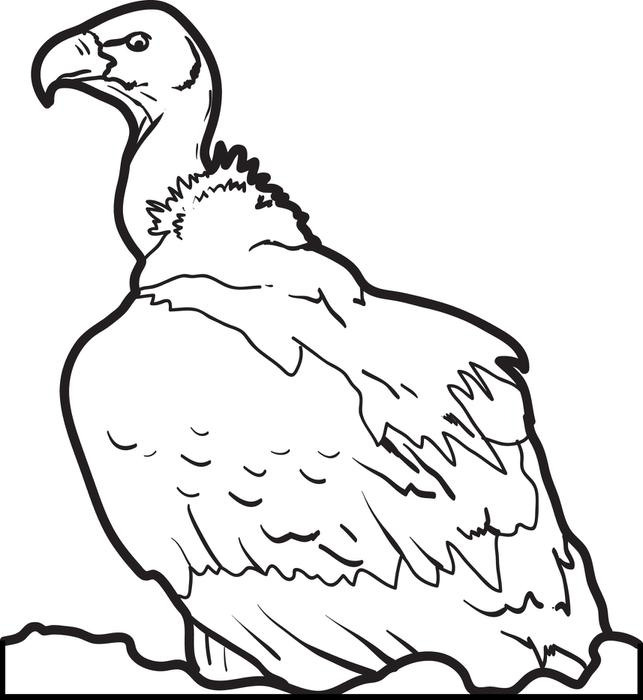 643x700 Vulture Coloring Pages
