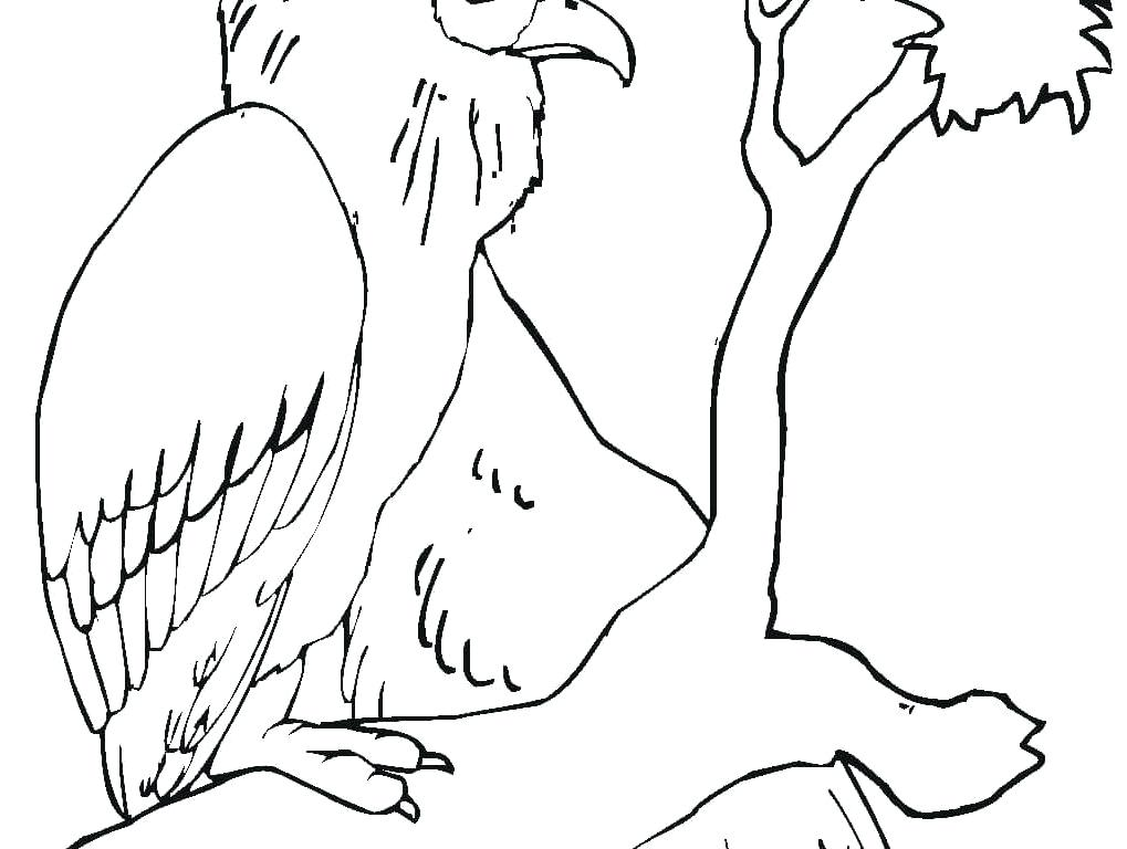 1019x768 Vulture Coloring Pages Downloads Letter V Is For Vulture Coloring