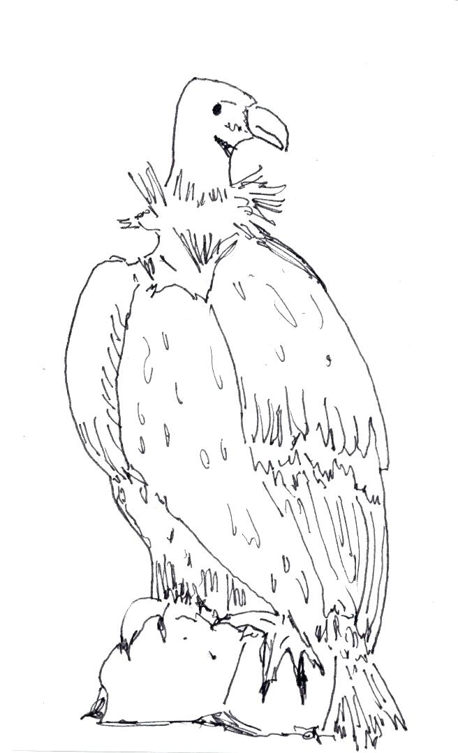 656x1078 Vulture Coloring Pages Drawn Turkey Vulture Cute Pencil