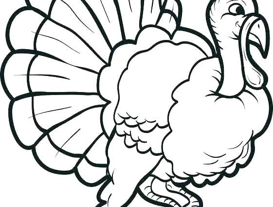 561x425 Vulture Coloring Pages Vultures Birds Coloring Pages Turkey