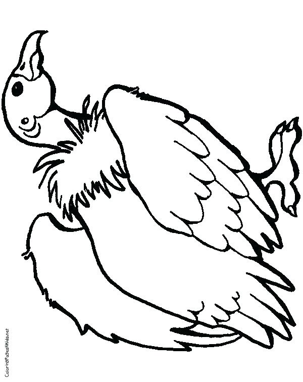 600x756 Pigeon Coloring Pages Vulture Coloring Pages Pin Drawn Turkey