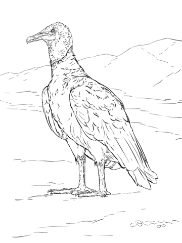 360x480 Realistic Black Vulture Coloring Page Ink Drawings