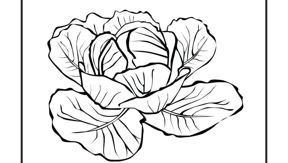 Turnip Coloring Page at GetDrawings.com   Free for personal use ...