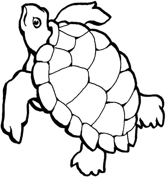 540x576 Sea Turtle Coloring Pages