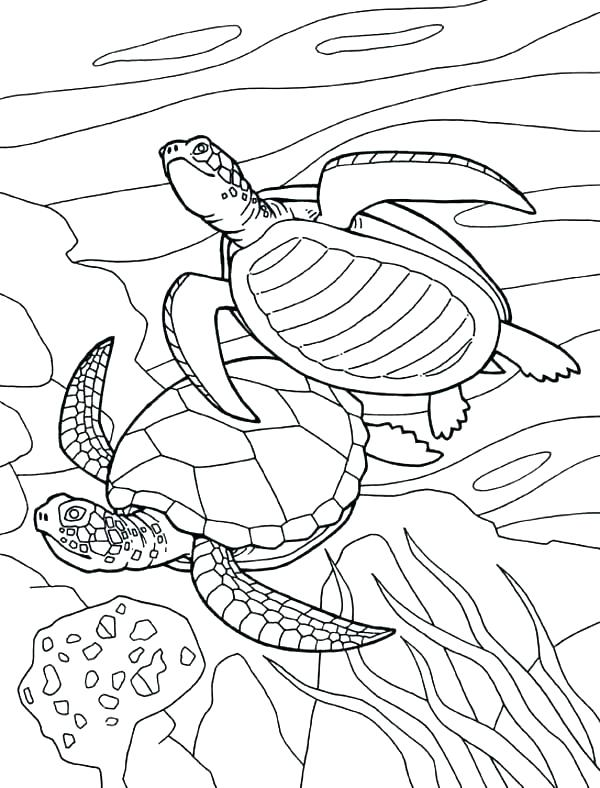 600x788 Sea Turtle Coloring Pages Green Sea Turtle Coloring Page Sea