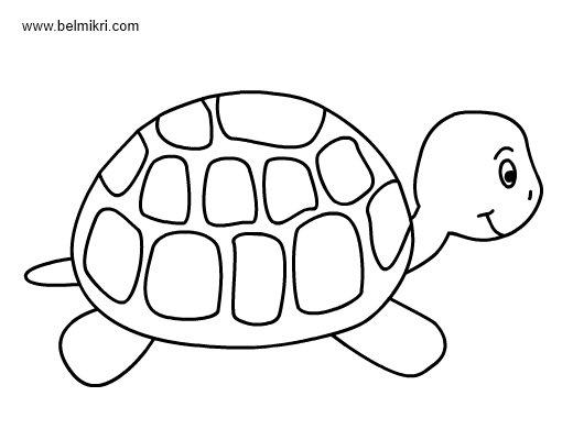 image relating to Turtle Pattern Printable identified as Turtle Coloring Webpages For Little ones at  Cost-free for