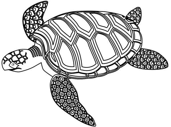600x444 Mozaic Green Sea Turtle Coloring Page