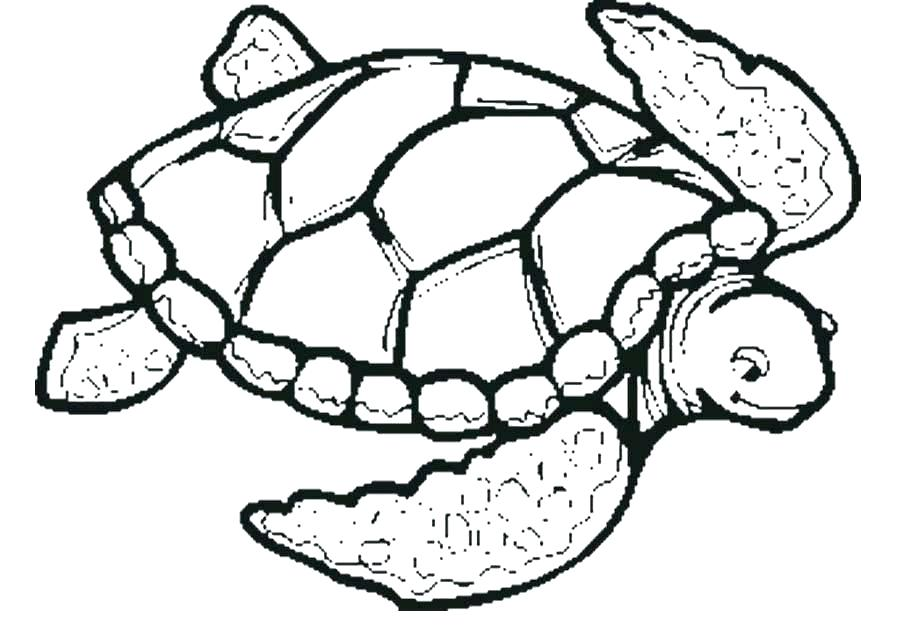 900x632 Ninja Turtle Colouring Pages Turtle Color Pages Sea Turtle