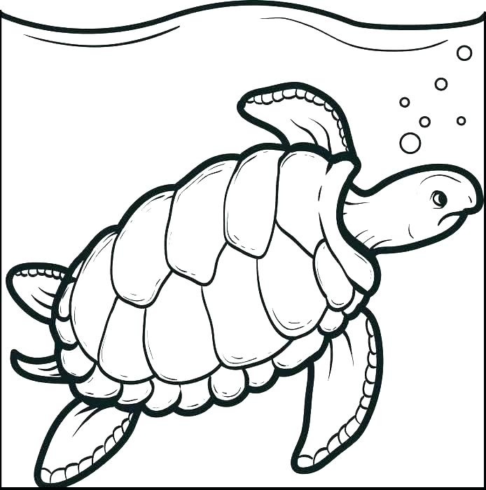 694x700 Turtle Coloring Pages Free Of Cute Turtle Green Sea Turtle