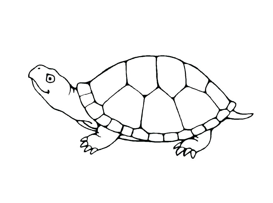 871x647 Turtle Coloring Pages Printable Green Sea Turtle Coloring Page
