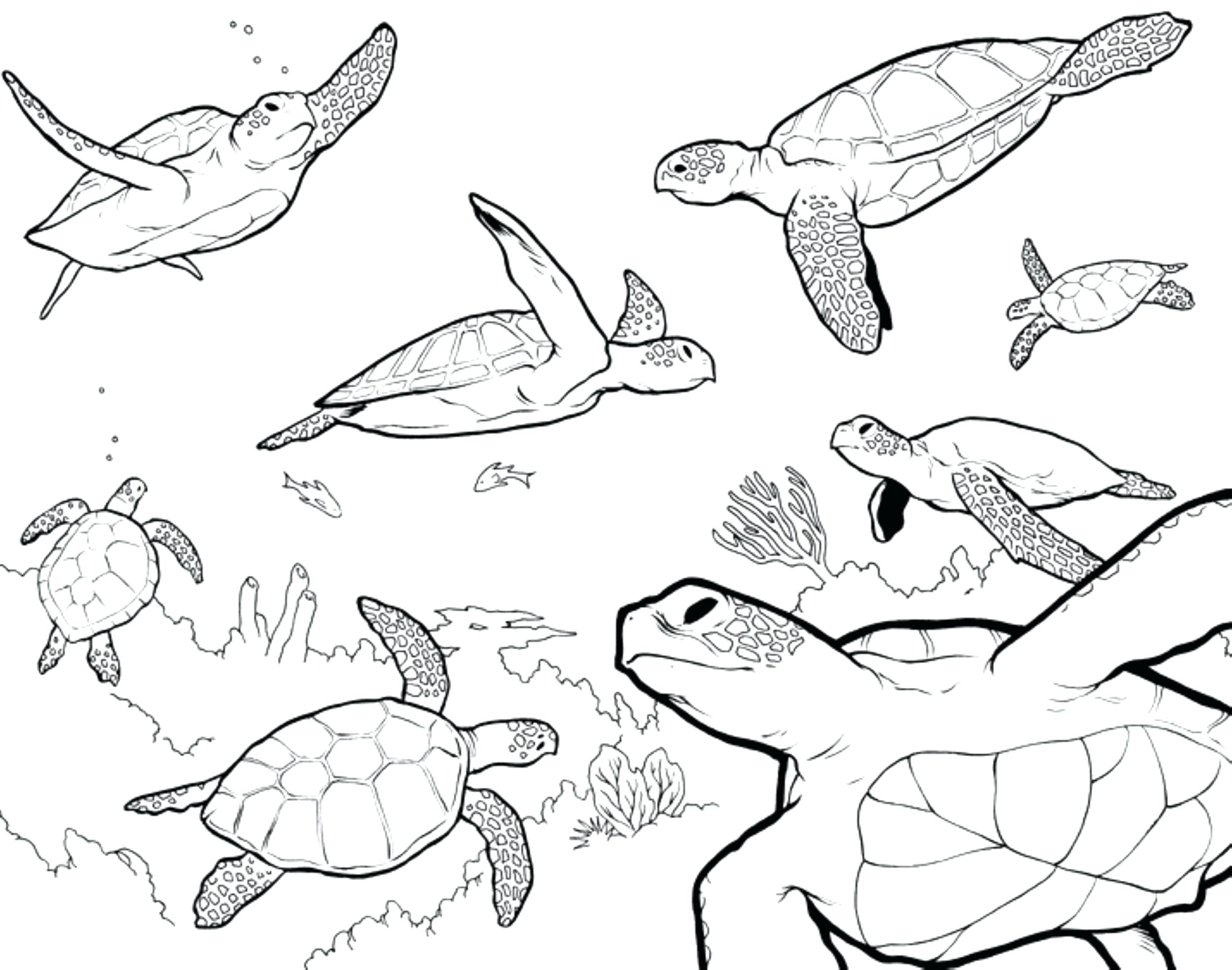 2500x1969 Coloring Pages Thanksgiving Free Seashells Complete Sea Shells