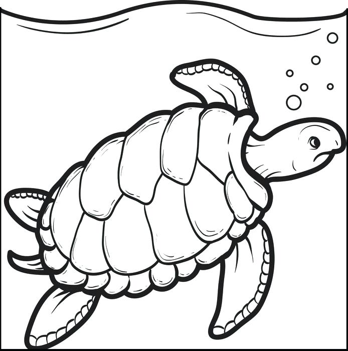 694x700 Free Printable Swimming Turtle Coloring Page For Kids Swimming