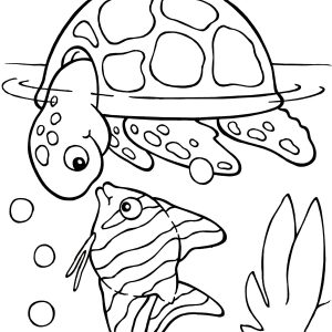 300x300 Turtle Shell Coloring Pages New Turtle Shell Coloring Pages Best