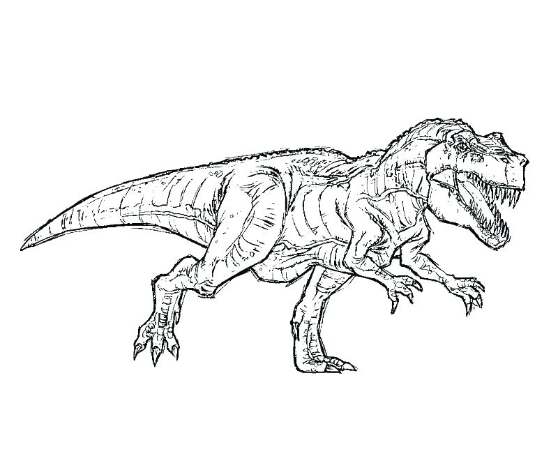800x667 Tyrannosaurus Rex Coloring Page Amazing Tyrannosaurus Coloring