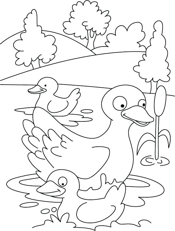 560x740 Pigeon And Duckling Coloring Pages Ugly Duckling Coloring Page