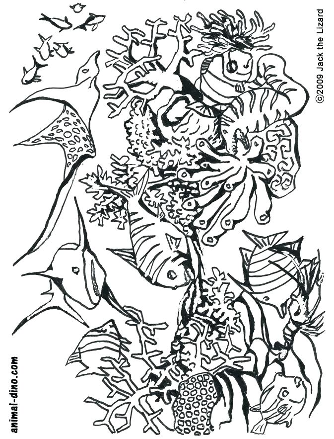 673x883 Ocean Coloring Pages Under The Sea Coloring Pages Ocean Coloring