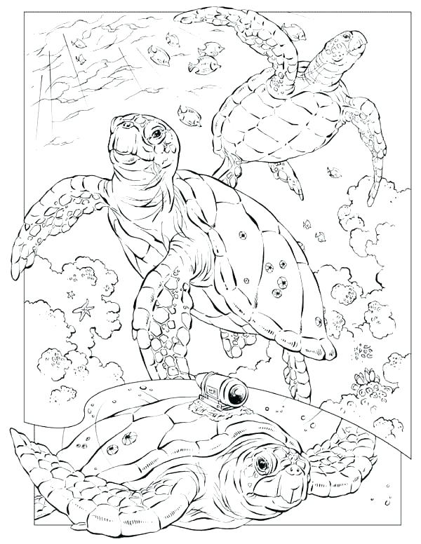 600x776 Sea Shell Coloring Page Sea Shells Coloring Pages Under Sea