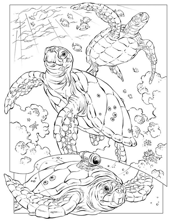 600x776 Sea Turtle, Sea Turtle Documentary Coloring Page Coloring