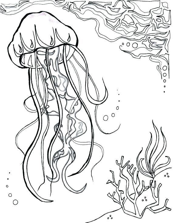 570x733 Ocean Scene Coloring Page Best Ocean Scene Coloring Pages