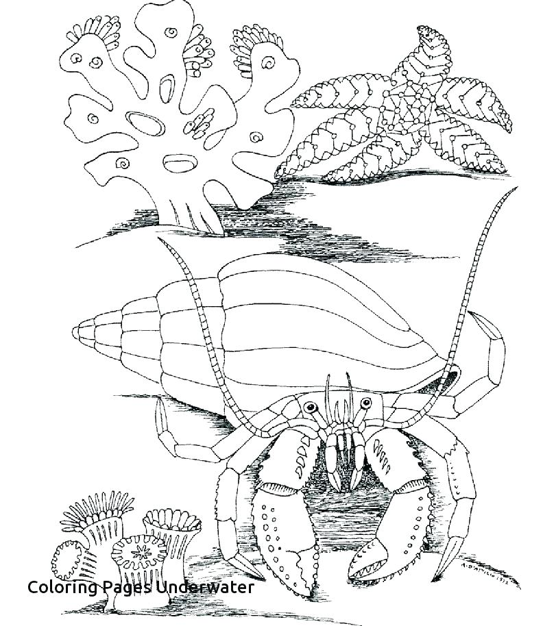 792x914 World Coloring Pages World Coloring Page Underwater Coloring World