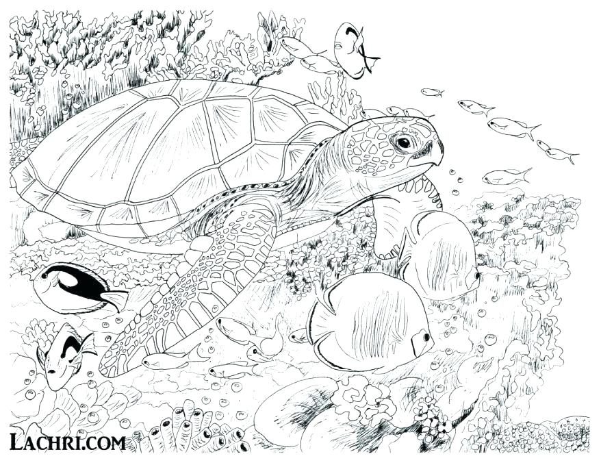 878x679 Underwater Coloring Pages Under Sea Coloring Pages Color This Sea