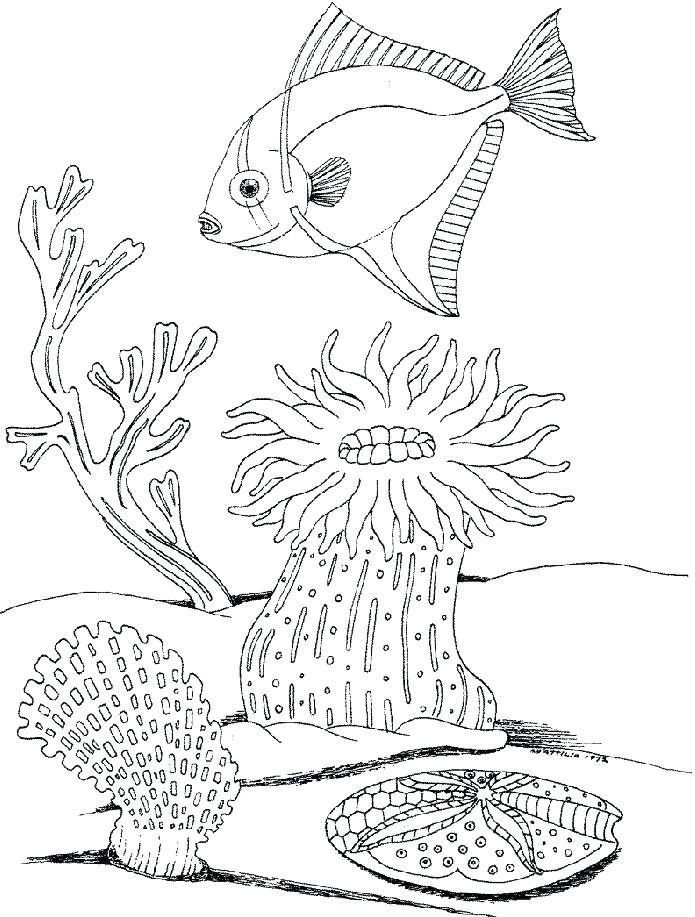695x917 Underwater Coloring Pages Underwater Sea Coloring Pages Adult Page